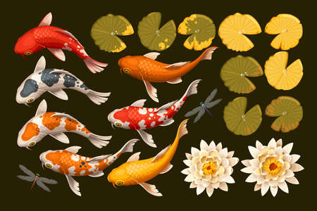 Vector set of koi fish and lotus flowers and leaves Çizim