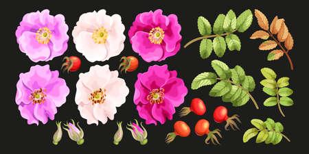Vector set di dolci fiori radica, foglie, germogli e frutti di bosco
