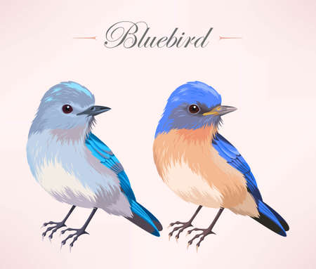 birdsong: Vector illustration of cute bluebird in two color variants