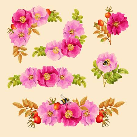 dog rose: Vector set of decorative elements with dog rose and bumblebees