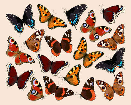 Collection of butterflies.