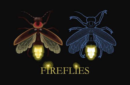 Illustration of glowing firefly