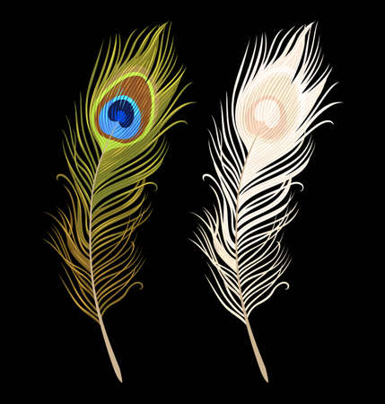 Vector illustration of green and white peacock feathers.