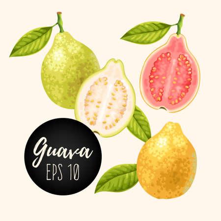 Set of guava fruits Vetores