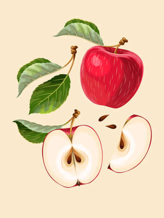 Vector set of apples. Vector whole apple, sliced apples and leaves
