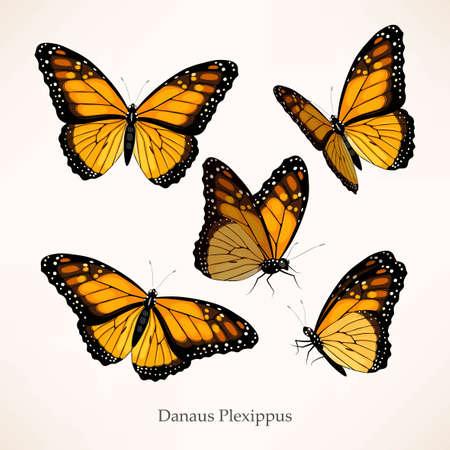 Monarch vector art in several different views Vecteurs