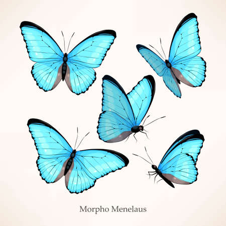Vector set of morpho in five different views