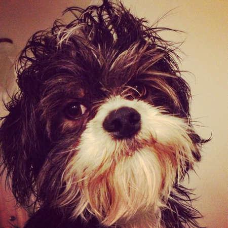 otganimalpets01: Cute dog