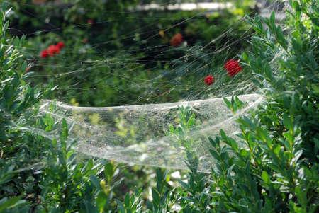 web: web