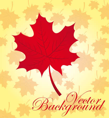 red leaf over leaves autumn background.  Vector