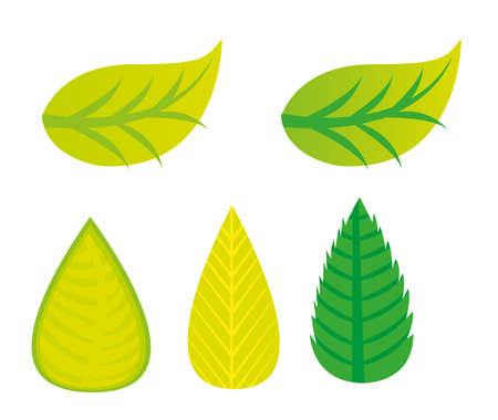 green leaves cartoons  isolated over white background. vector Stock Vector - 10768385