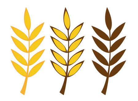 oats: gold and brown wheats cartoon isolated over white background. vector Illustration