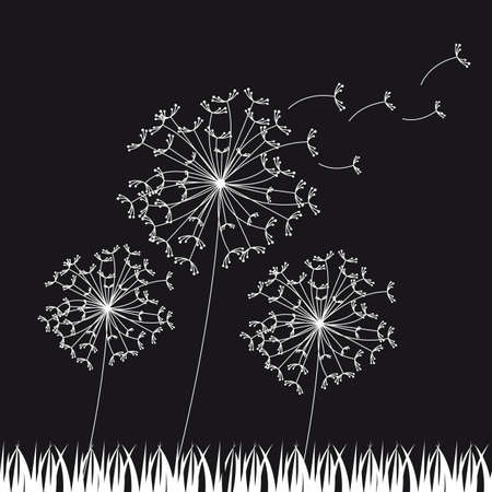 posterity: black and white dandelios, nature background. vector illustration