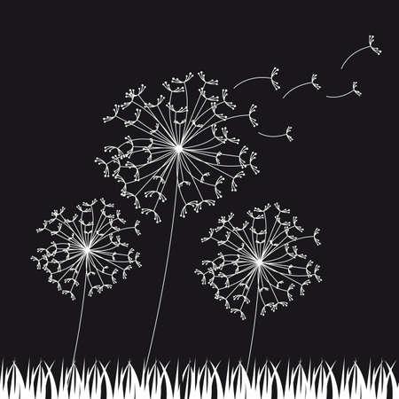 fluff: dandelios en blanco y negro, fondo de la naturaleza. ilustraci�n vectorial