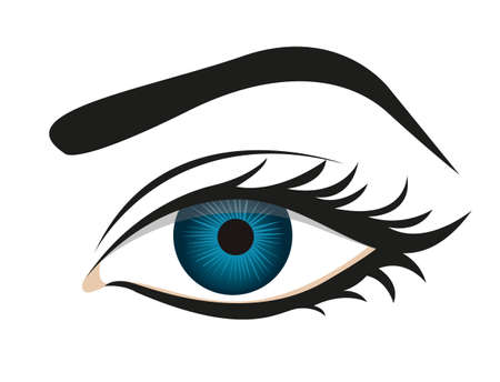 open eye: detailed eye lashes and eyebrows, vector illustration