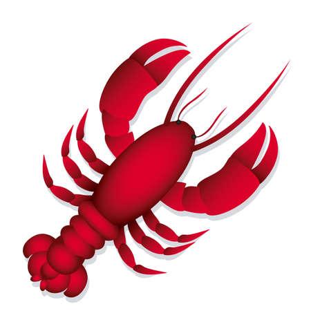 shellfish: Illustration of lobster, isolated on white background, illustration