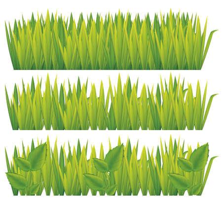 illustration of green grass isolated on white background, vector illustration Stock Vector - 14984600
