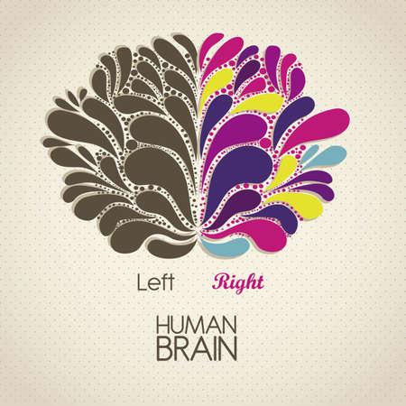 thalamus: Ilustraci�n del cerebro humano. Los l�bulos y funciones, ilustraci�n vectorial Vectores