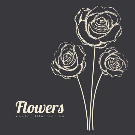 roses design over black background vector illustration  Vector