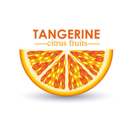 tangerine citrus fruit  over white background vector illustration  Stock Vector - 22067067
