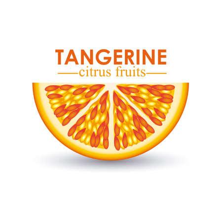 tangerine citrus fruit  over white background vector illustration Stock Vector - 22067067