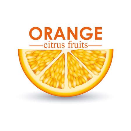 orange citrus fruit  over white background vector illustration  Stock Vector - 22067065