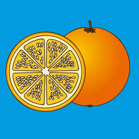 citrus fruit over blue background vector illustration Stock Vector - 22067070