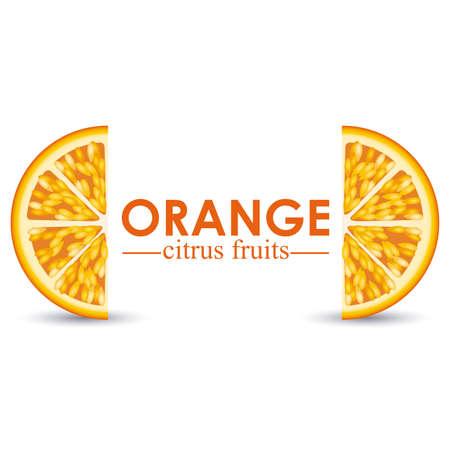 orange citrus fruit  over white background vector illustration Stock Vector - 22067073
