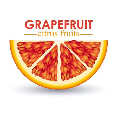 grapefruit citrus fruit  over white background vector illustration   Stock Vector - 22067074