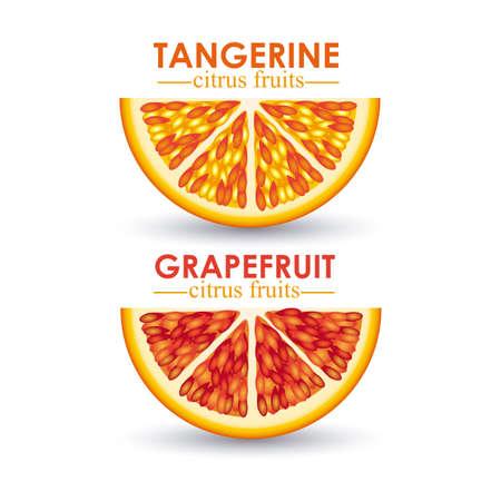 citrus fruit over white background vector illustration Stock Vector - 22067077