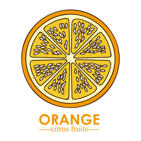 halved: orange citrus fruit  over white background vector illustration