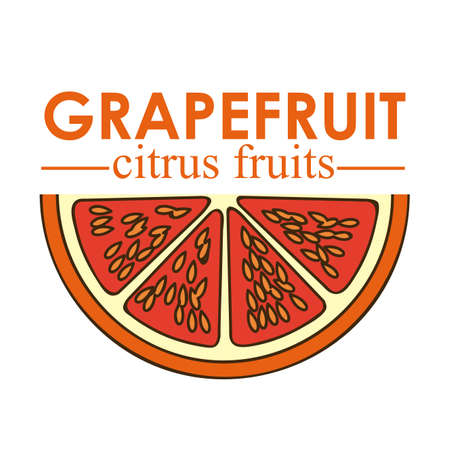 grapefruit citrus fruit  over white background vector illustration   Stock Vector - 22067087