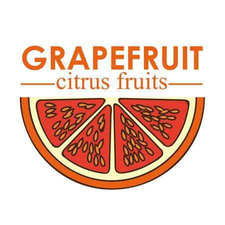 grapefruit citrus fruit  over white background vector illustration Stock Vector - 22067087
