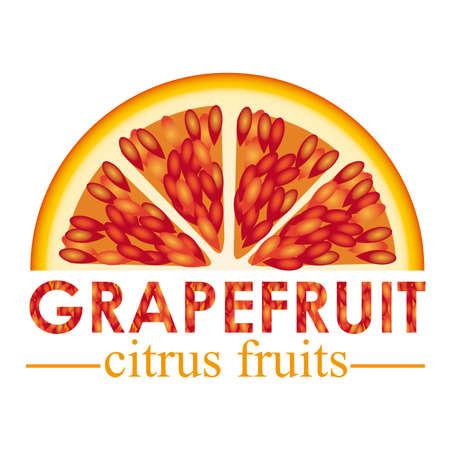 grapefruit citrus fruit  over white background vector illustration   Stock Vector - 22067090