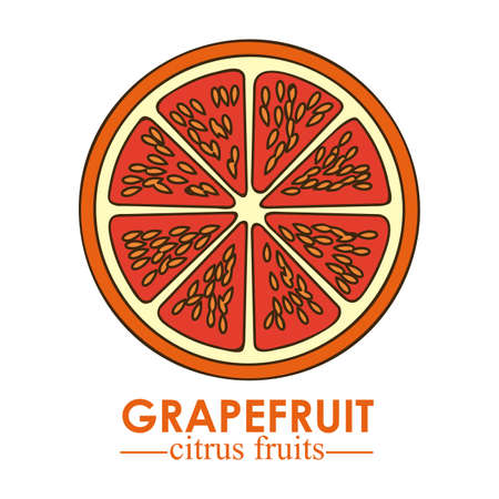 grapefruit citrus fruit  over white background vector illustration   Stock Vector - 22067092