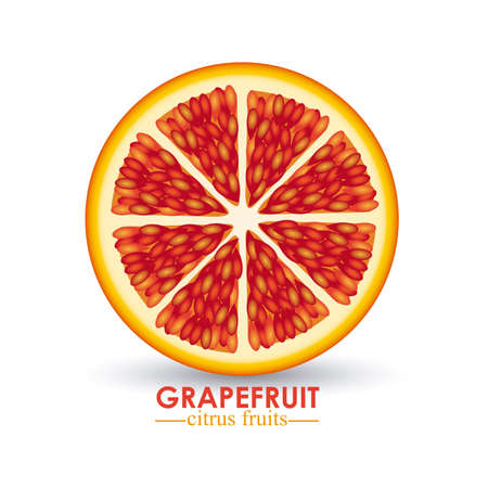 grapefruit citrus fruit  over white background vector illustration Stock Vector - 22067388