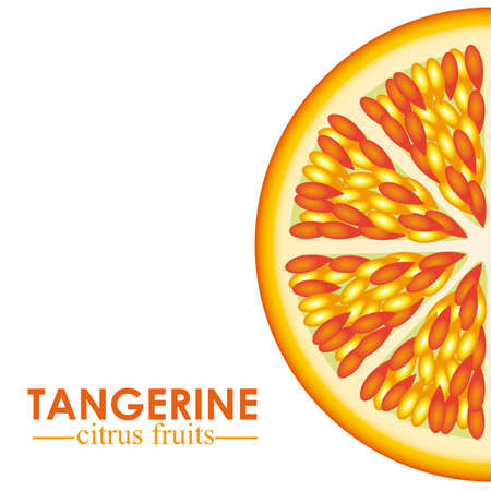 halved: tangerine citrus fruit  over white background vector illustration
