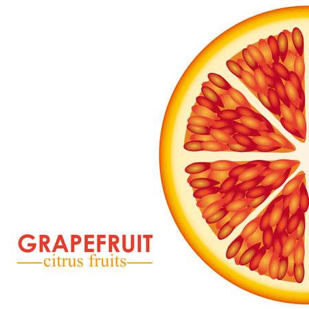 grapefruit citrus fruit  over white background vector illustration Stock Vector - 22067400