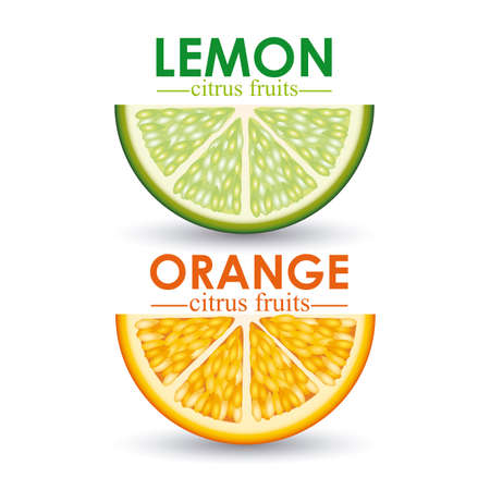citrus fruit over white background vector illustration  Vector