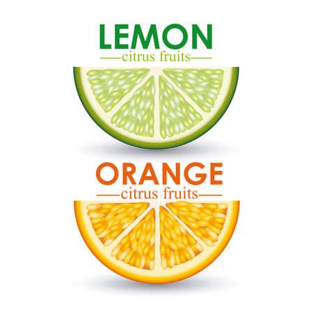 citrus fruit over white background vector illustration Stock Vector - 22067405