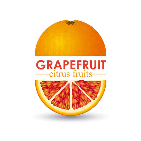grapefruit citrus fruit  over white background vector illustration   Stock Vector - 22067465