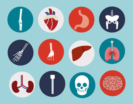 viscera: body,healthy desing over, blue background, vector illustration.