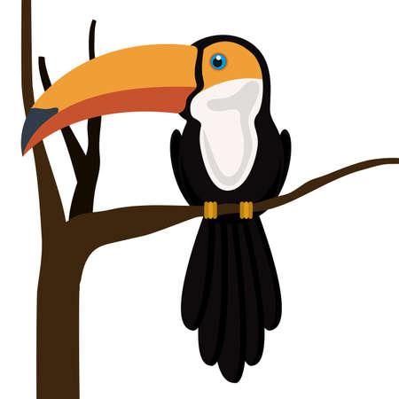 Toucan design, vector illustration Vector