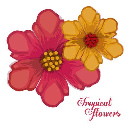 tropical flowers: Tropical flowers design, vector illustration