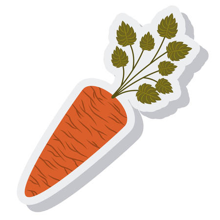 fruit and vegetable: carrot vegetable isolated icon vector illustration design Illustration