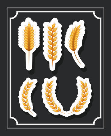 yellow agriculture: wheat ear gold yellow agriculture con. Colorful and Flat design. Vector illustration