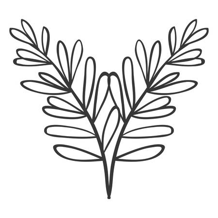 ramification: pair of branches with oval leaves vector illustration Illustration