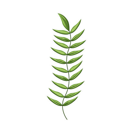 ramification: green stem with many leaves vector illustration