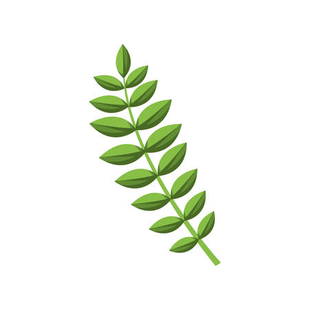 ramification: green stem with many oval leaves vector illustration
