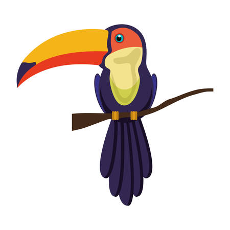 colorful toucan bird beautiful animal over white background. vector illustration